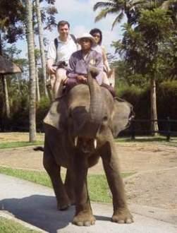 ELEPHANT RIDING1